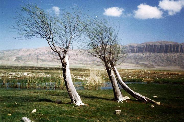 دشت ارژن فارس
